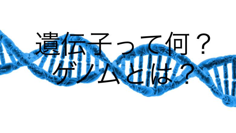 DNAと遺伝子とゲノムの違いは?