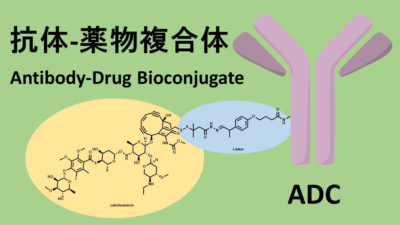 抗体薬物複合体 (抗体医薬複合体) : Antibody-Drug Conjucate (ADC)