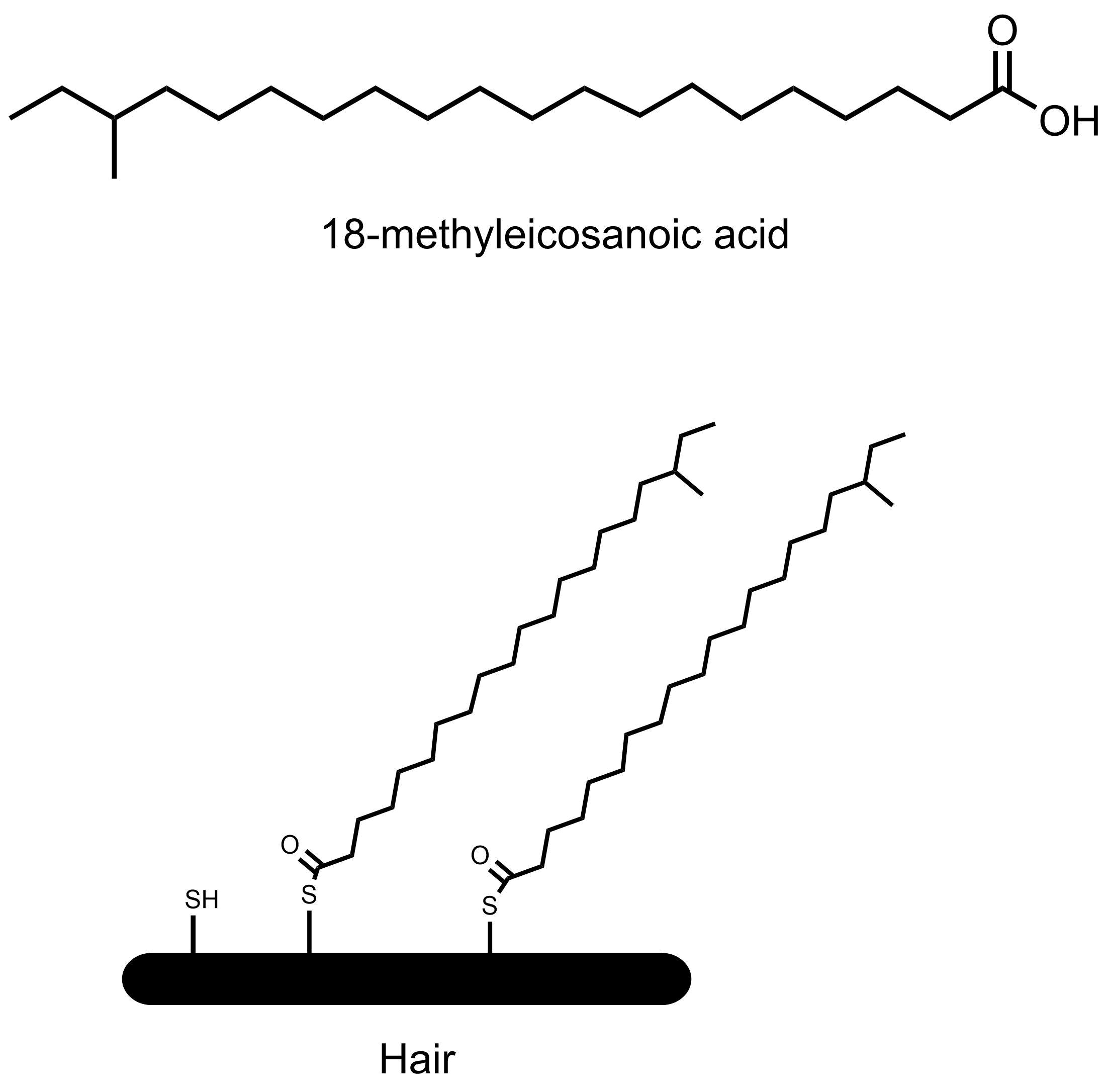 髪の毛表面の化学構造
