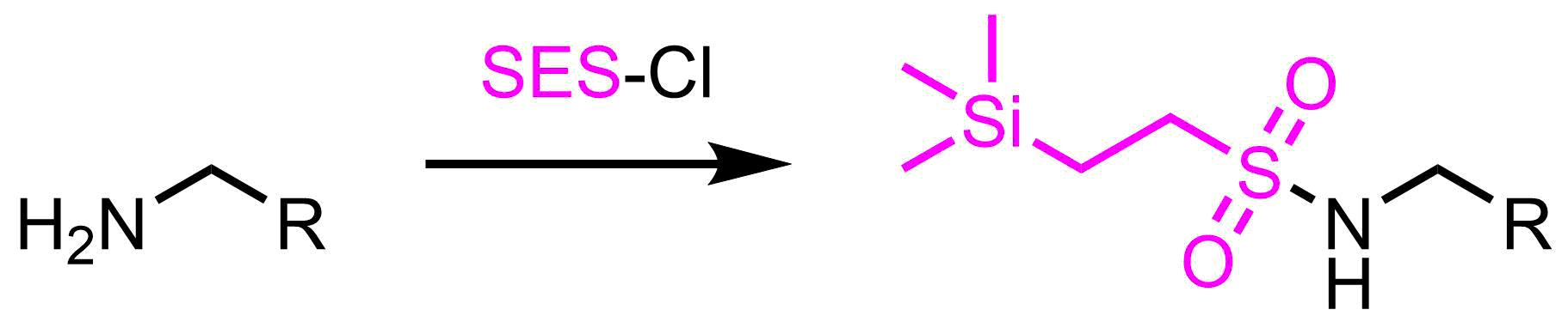 SES基の構造