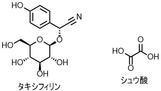 タケノコの毒、タキシフィリンとシュウ酸