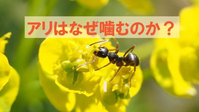 蟻はなぜ噛むの?