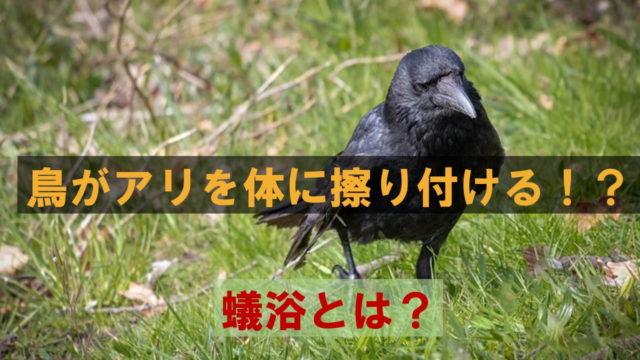 鳥がアリを体にこすりつける不可解な行動!蟻浴とは?