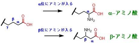 αアミノ酸とβアミノ酸