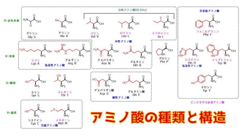 アミノ酸の種類と構造の一覧