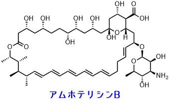 アムホテリシンBの構造