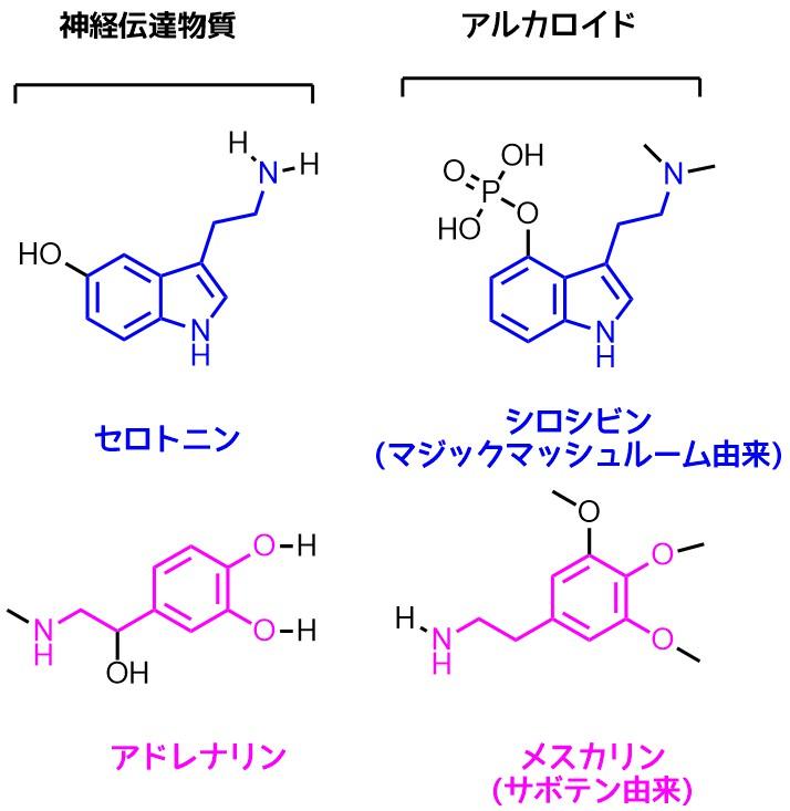 アルカロイドと神経伝達物質の類似性