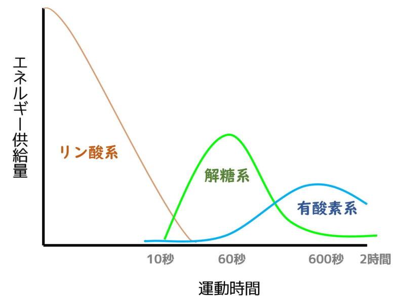 エネルギー消費系