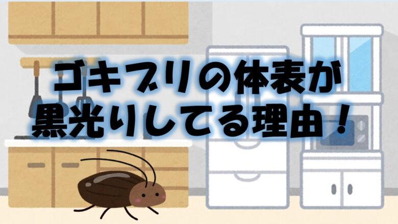 ゴキブリが油ぎって黒光りしている理由を科学的に考察