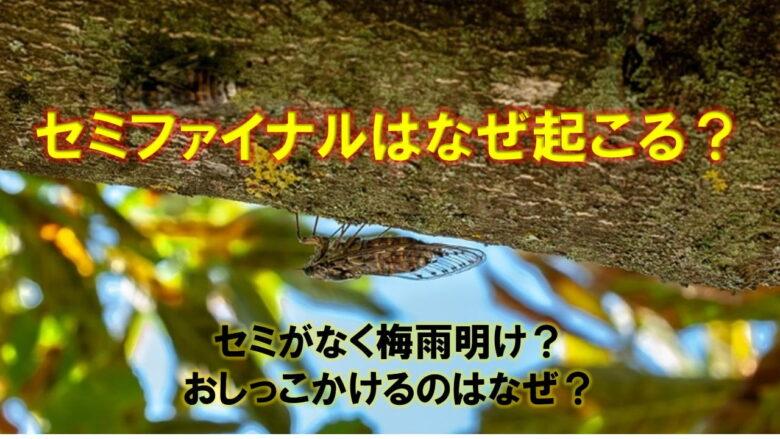 なぜセミファイナルは起きる?蝉の不思議集!