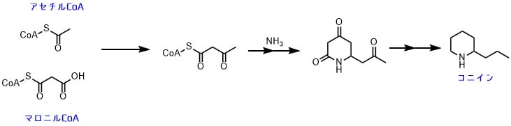 ポリケチド経路でピペリジン環