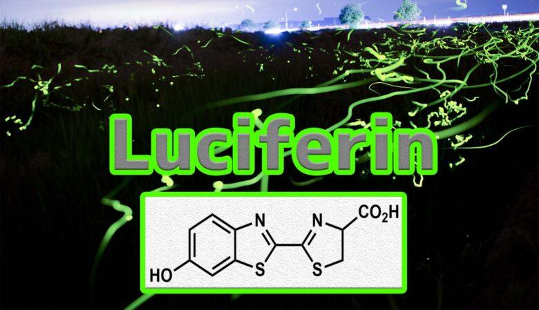 ルシフェリンとは?発光の原理、種類、作り方まとめ