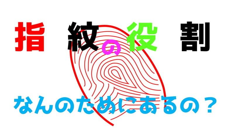 指紋の役割とは?なぜ指紋はあるのか?