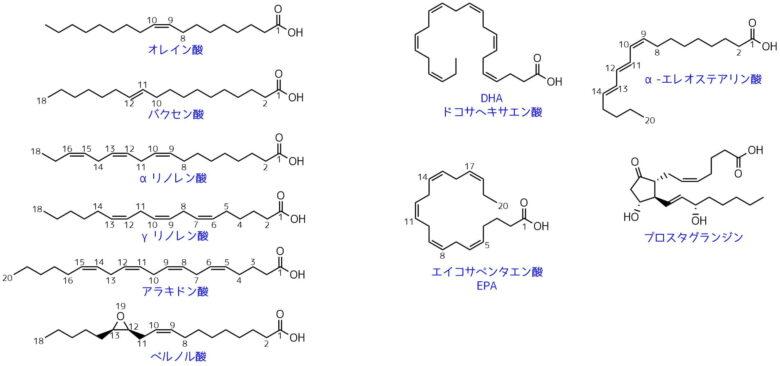 脂肪酸の一覧