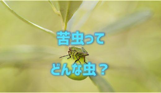 苦虫を噛み潰したようなの苦虫ってどんな虫?