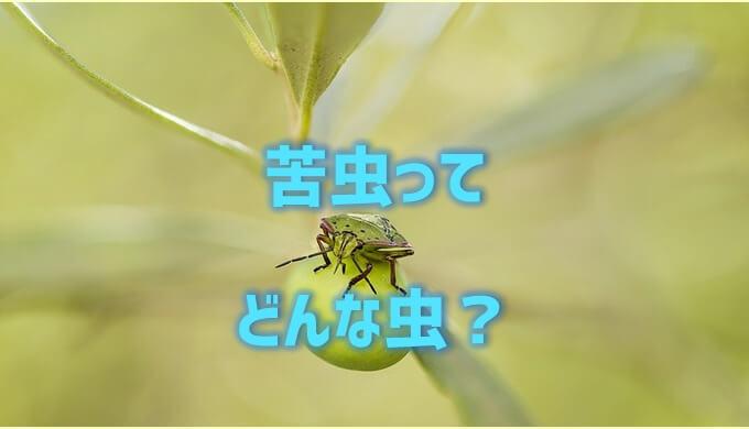 苦虫ってどんな虫?