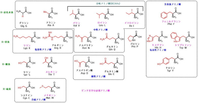 アミノ酸の構造一覧