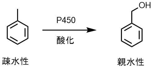 P450トルエン酸化