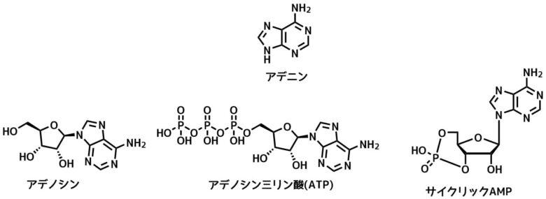 アデノシンの誘導体
