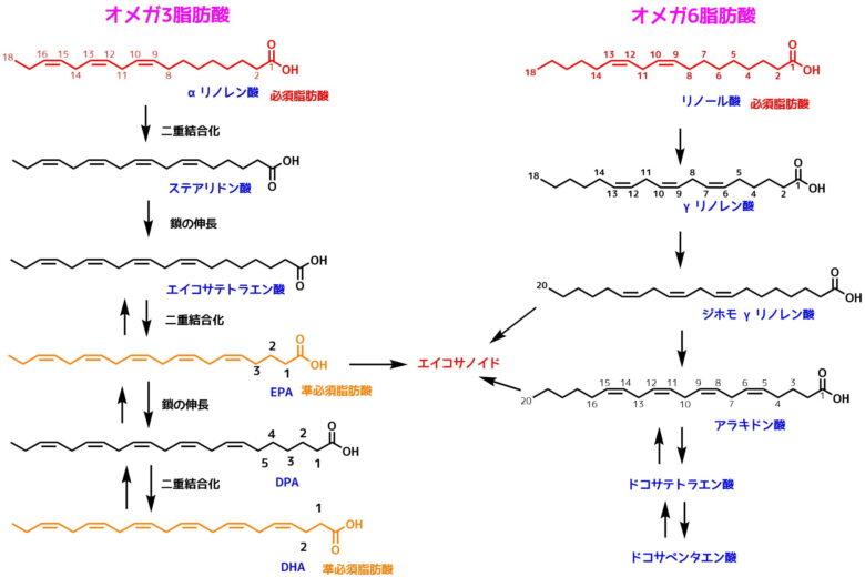 オメガ3と6の脂肪酸生合成