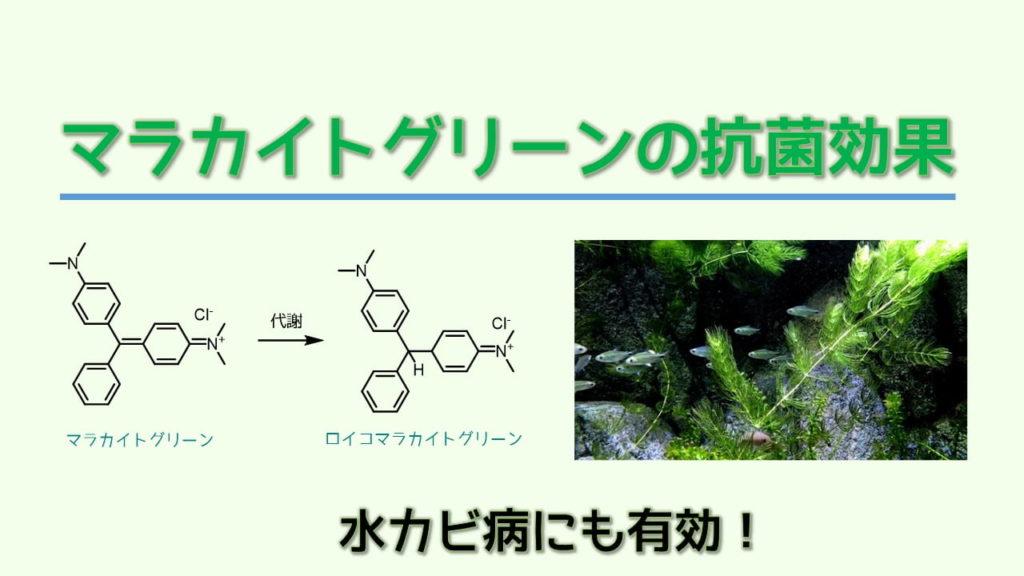 マラカイトグリーンの抗菌効果