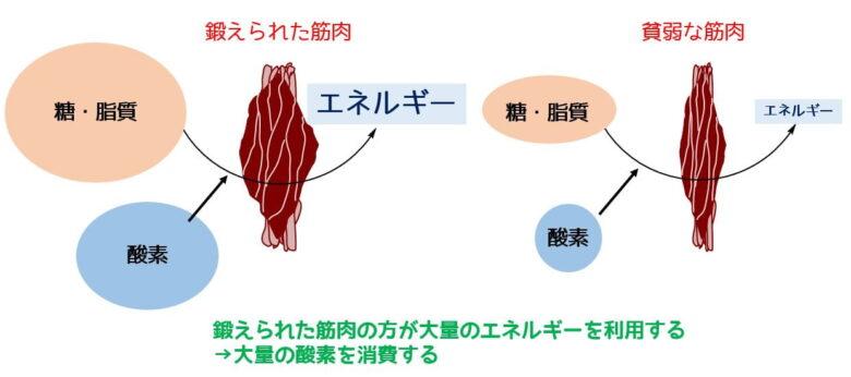 最大酸素摂取量のイメージ