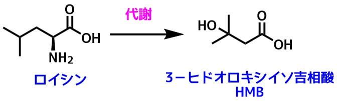 HMBの構造