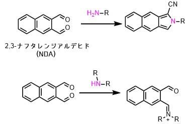 オルトナフタレンジアルデヒドの反応