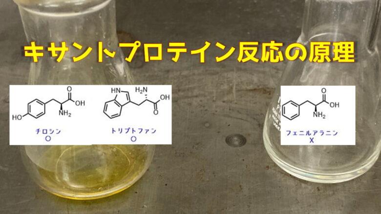 キサントプロテイン反応の原理 -芳香族アミノ酸を黄変色で検出