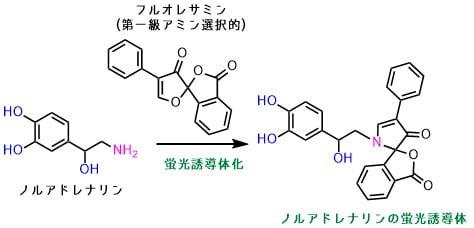 ノルアドレナリンの蛍光誘導体化