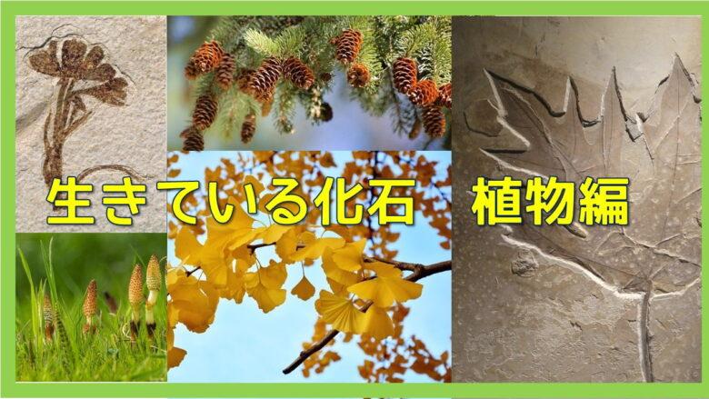 生きている化石の植物
