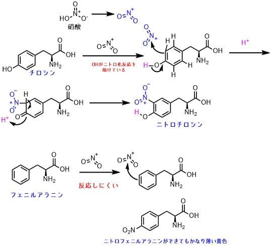 芳香族アミノ酸のニトロ化