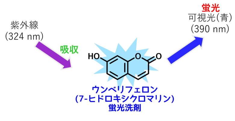 蛍光分子の吸収と蛍光