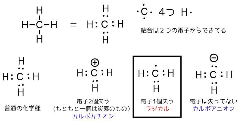 ラジカル種の構造