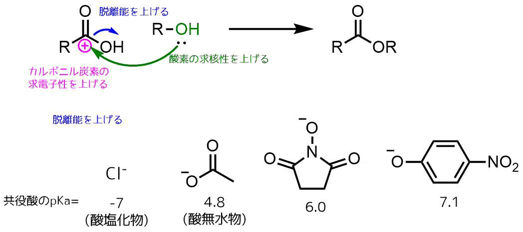 縮合剤を利用したエステル化の戦略
