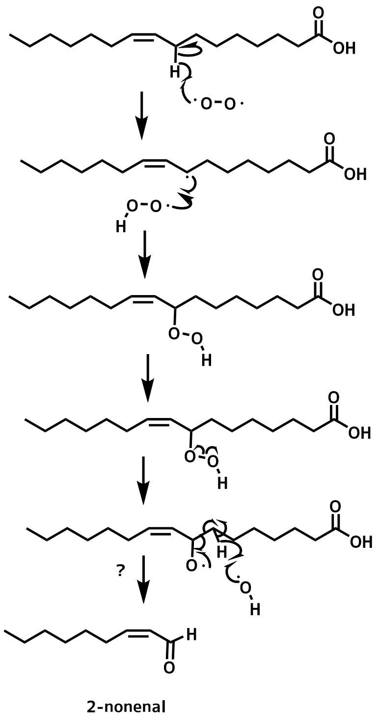 2-ノネナールの生成機構2-ノネナールの生成機構