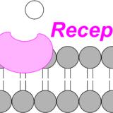 受容体とは?簡単にわかりやすく種類や働きを解説します。