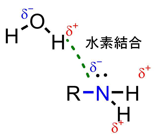 アミンの水素結合