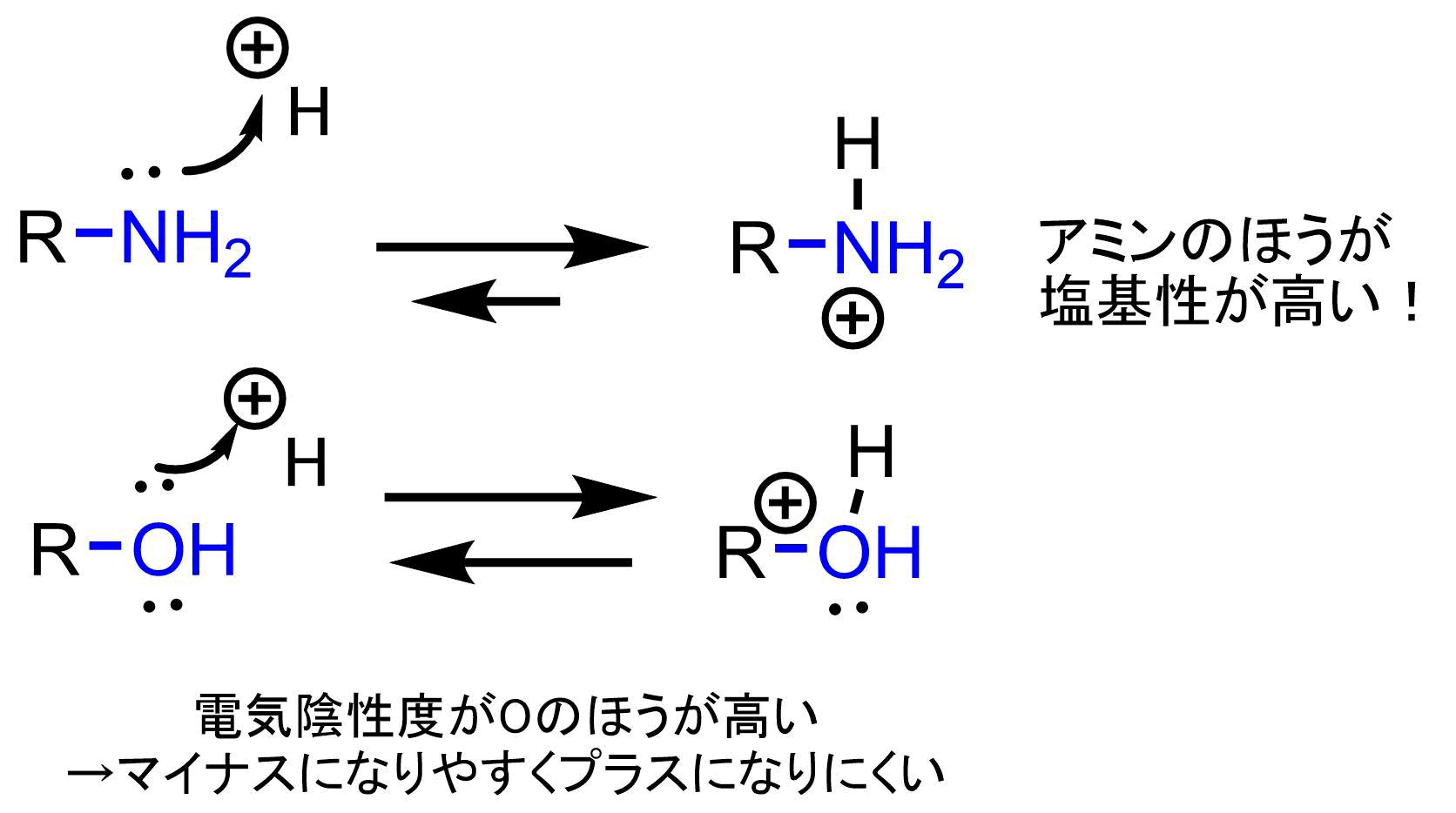 アルコールとアミンの塩基性の比較
