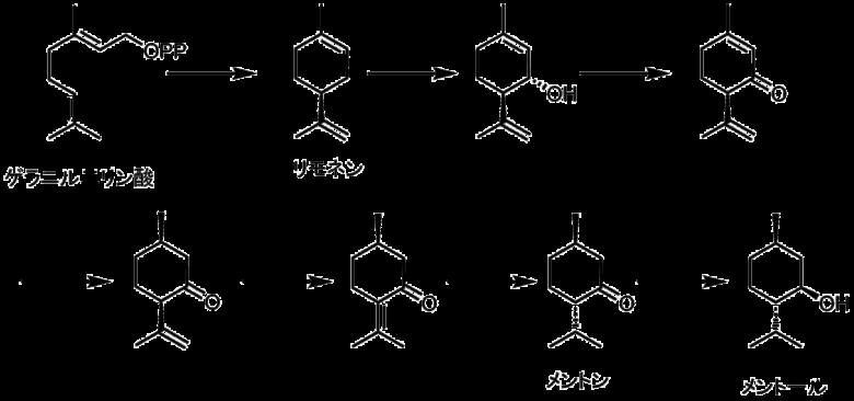 メントールの生合成