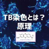 TB染色 トルイジンブルー染色とは?何を染める色素?原理