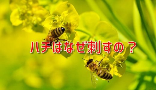 ハチが刺す理由とは?オスは刺さない?