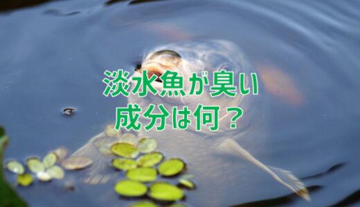 淡水魚はなぜ生臭いの?においの成分とは?