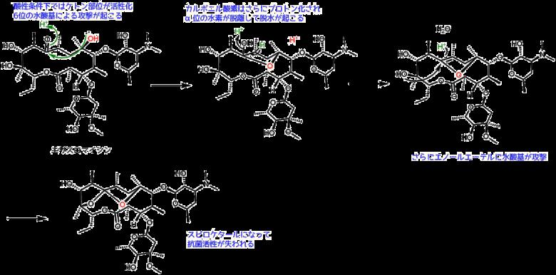 エリスロマイシンの不活性化作用