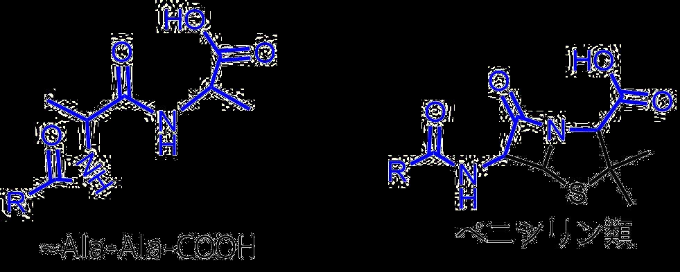 ペニシリンとアラニルアラニン