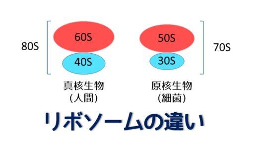 細菌と人間のリボソームの違い 50S & 30S or 60S & 40S